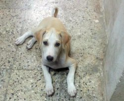 DogsIndia.com - Puppies for Free Adoption - Chennai