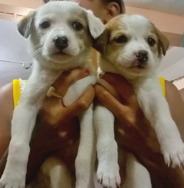 DogsIndia.com - Puppies For Free Adoption