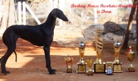 DogsIndia.com - Caravan Hound - Barking House Kennel - Vincent