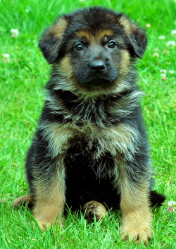 Dogs India - All about dogs, breeders, breeds, Indian ...