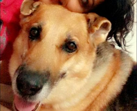 DogsIndia.com - Missing Dog